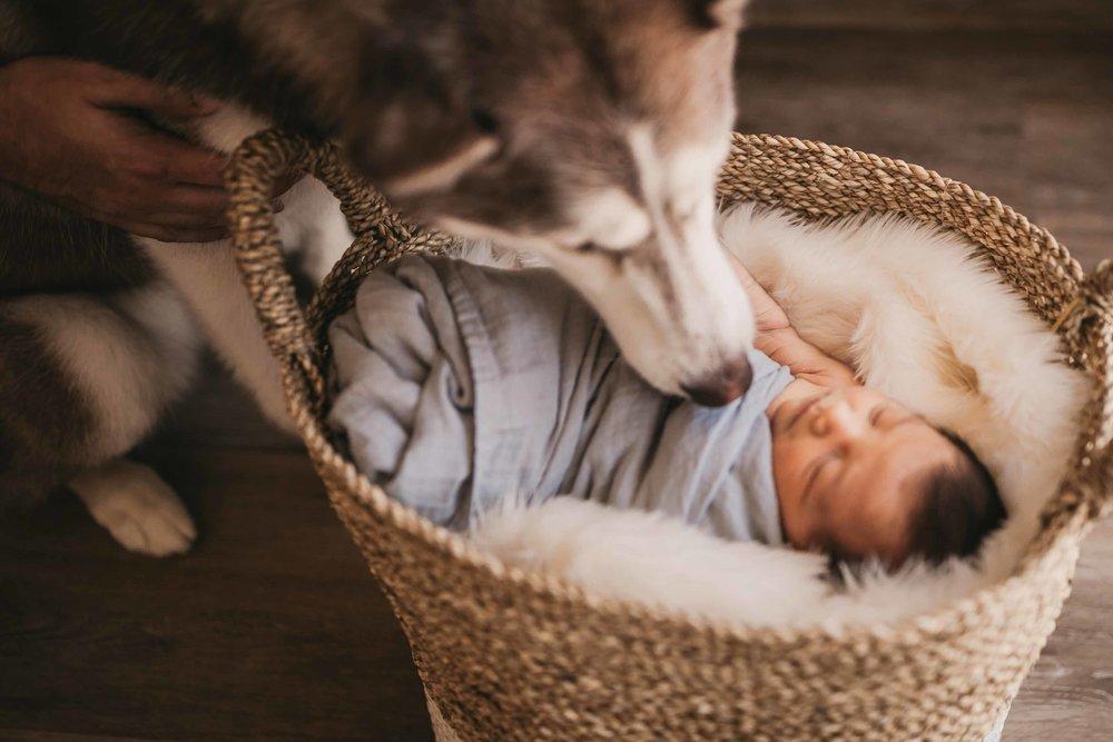 black-diamond-newborn-photos-32.jpg
