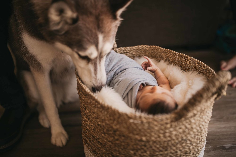 black-diamond-newborn-photos-30.jpg