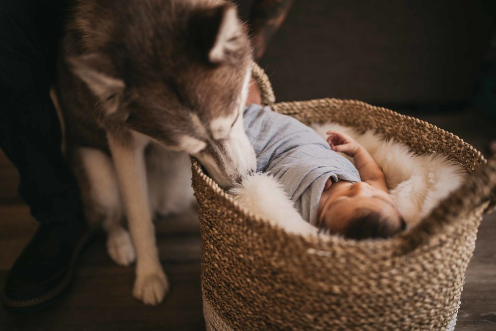 black-diamond-newborn-photos-31.jpg
