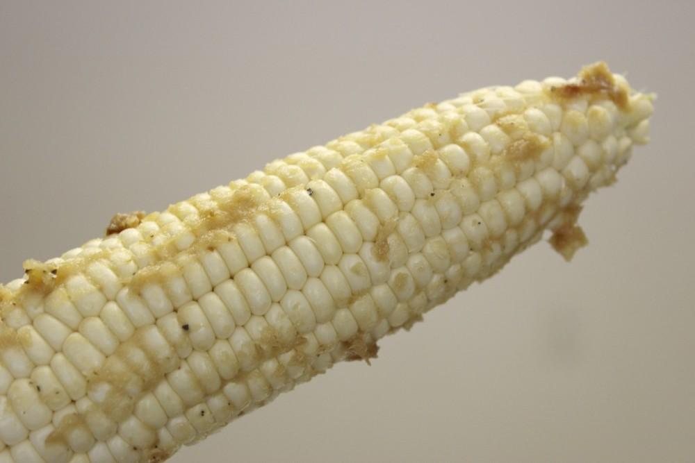 Grilled Corn 35