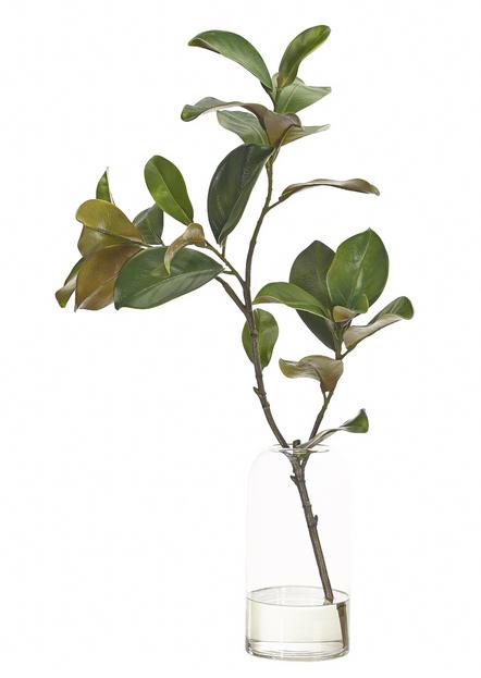 Magnolia Foliage  $260