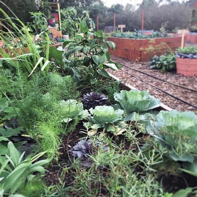 Join us Monday, June 27th for our Kitchen Box workshop in partnership with @eatlocalnola - you'll learn how to save money on herbs and veggies by building your very own Kitchen Box! (you know you want one)