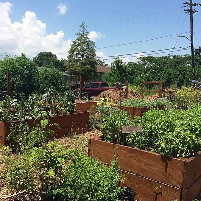 Thanks to everyone who swung by the garden today on the bike tour! 📷: @whynolafarms