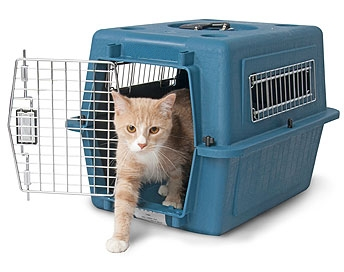 CAT VARI KENNEL.jpg