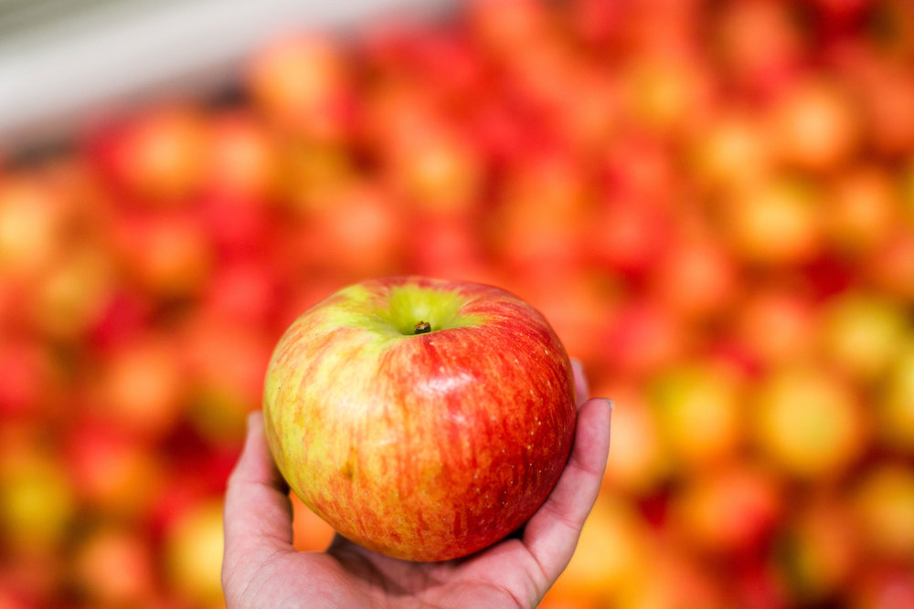 Apple Varieties by the Pound - Honeycrisp, Snowsweet, Haralson, Pazzaz, Cortland, Macintosh, Red Delicious, Gala, Jonamac