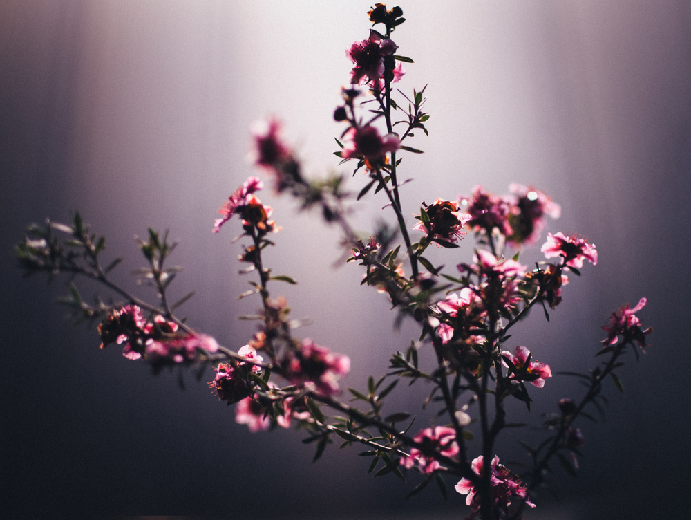 Pink || 7/366