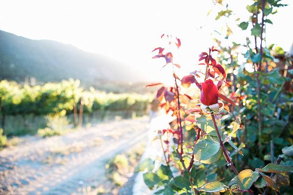 Vineyard-28.jpg