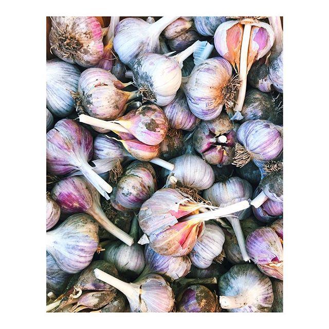 Pretty purple garlic... fresh harvest from #santafefarmersmarket, lots of kimchi in the near future. . . . . #delicious #nmlife #organic  #kimchi #simplysantafe  #santafe #exploretocreate  #purenm #myfeatureshoot  #garlic #huffpostgram  #vsco #newmexicotrue  #healthyliving #farmersmarket #theartofslowliving #somewheremagazine