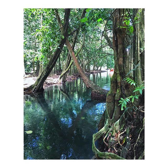 When we took a boat ride along the shore to explore this magical jungle... where the cool mountain streams meets the ocean... lovely swimming in fresh cold water! . . . . #tahiti #myfujifilm #fujifilmx_us  #finditliveit #exploretocreate  #fujifeed #iametraveler  #mytinyatlas #cntraveler  #stayandwander #vsco  #somewhere_travel #xt2 #travelstoke #ignant #jungle  #afarambassador #tlpicks #somewheretravel #fujifilm #imaginarymagnitude