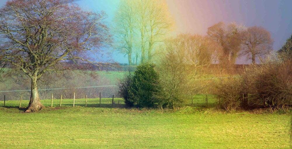 Rainbow in field 16th Jan.jpg