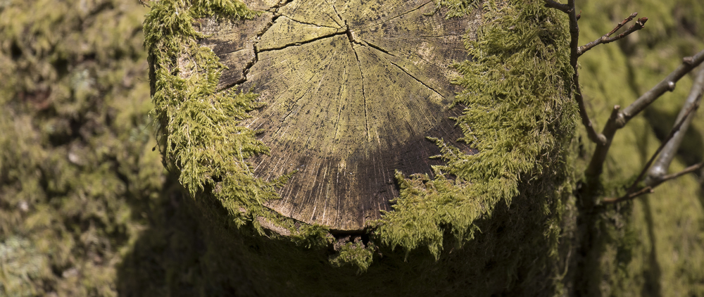 Tree Texture 26th March.jpg