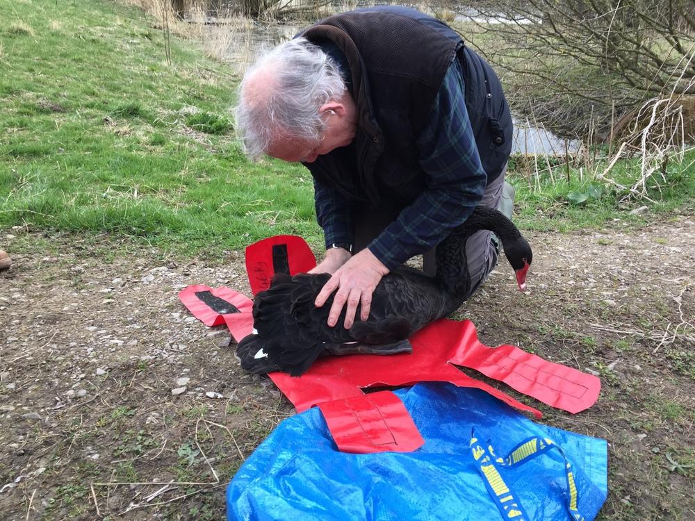 Peter at Newport Swan Rescue .JPG