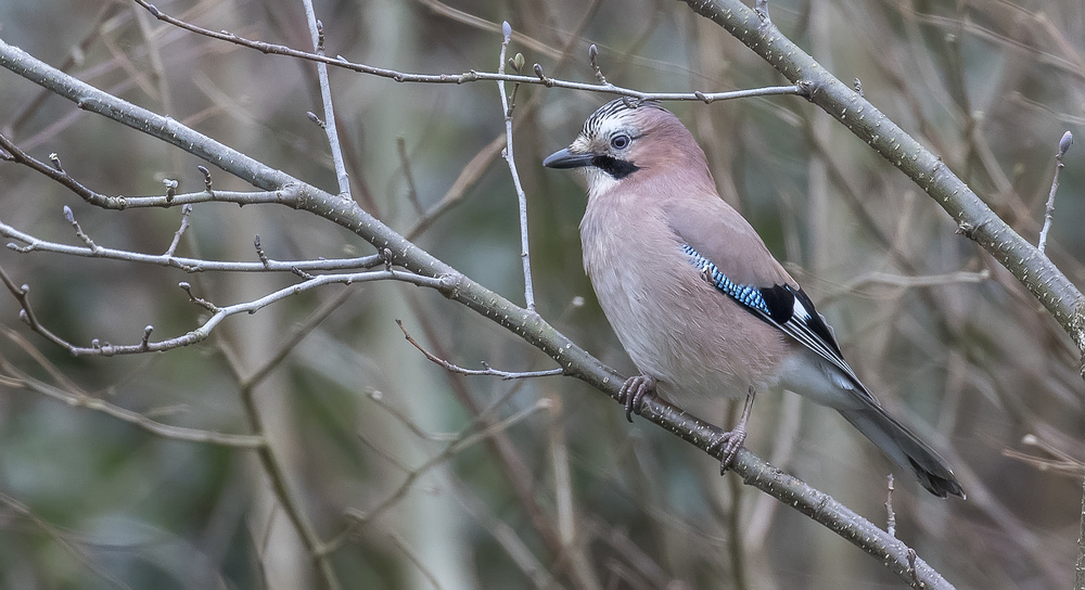 Jay on Street 3rd April.jpg