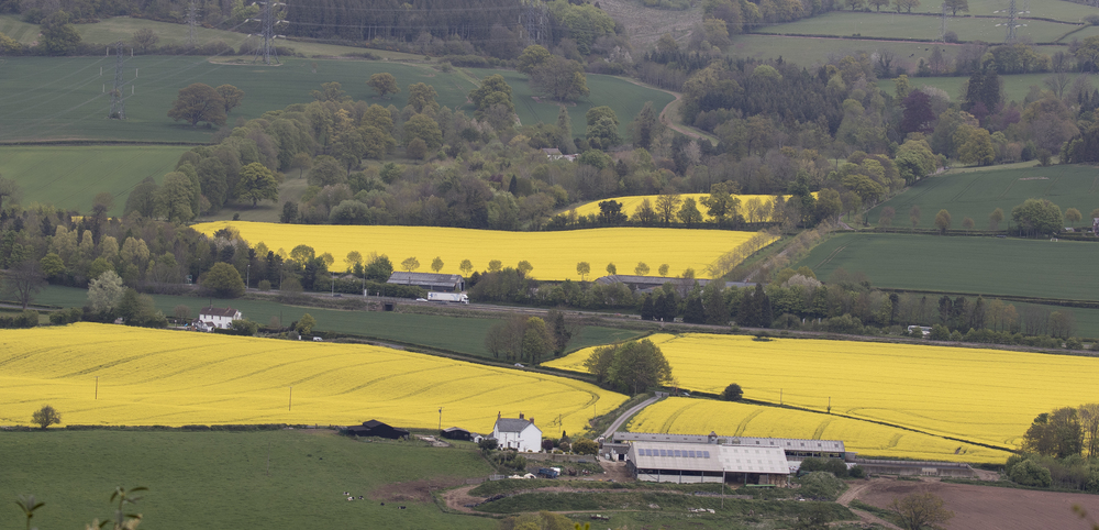 Rape Seed View 1st May.jpg