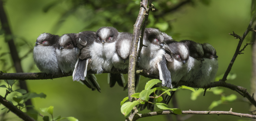 LLT 10 Chicks Sleeping 9th May.jpg