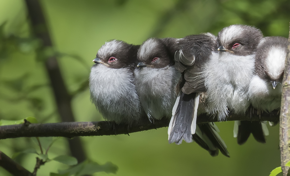 LTT Chick Crop 9th May.jpg