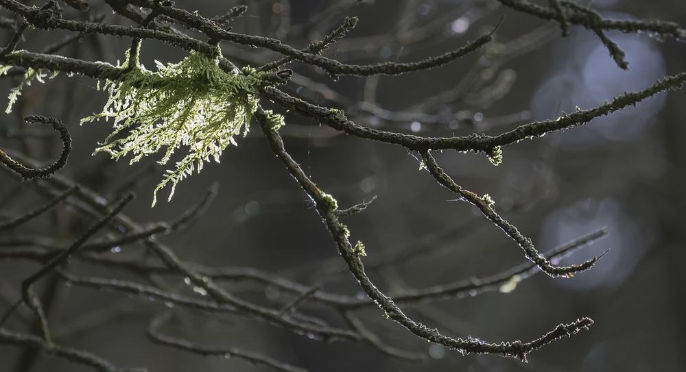 Moss Forest 6th June.jpg