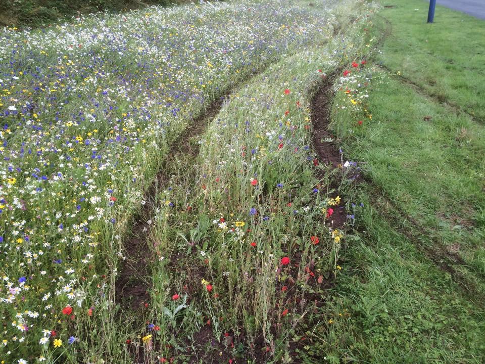 Wildflower Meadow Damage
