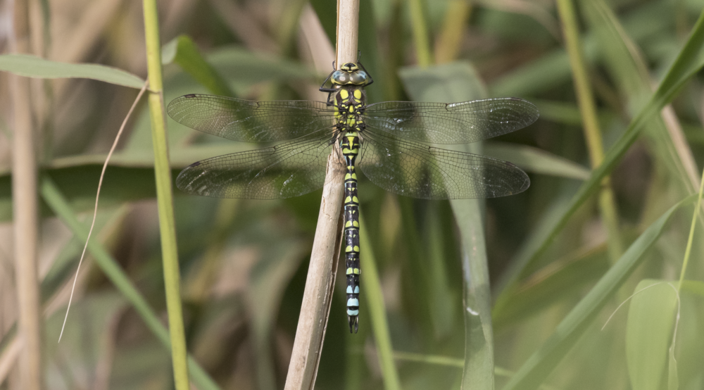 Southern Hawker 25th September.png