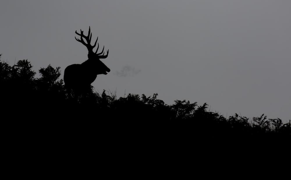 Red Deer Backlit 4th October.png