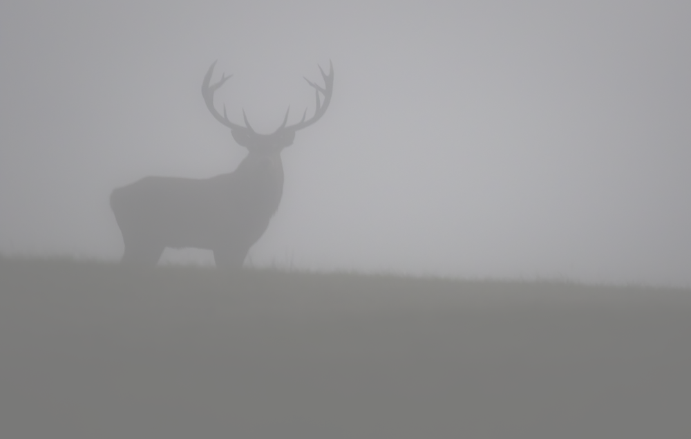Red Deer Early Fog 4th October.png
