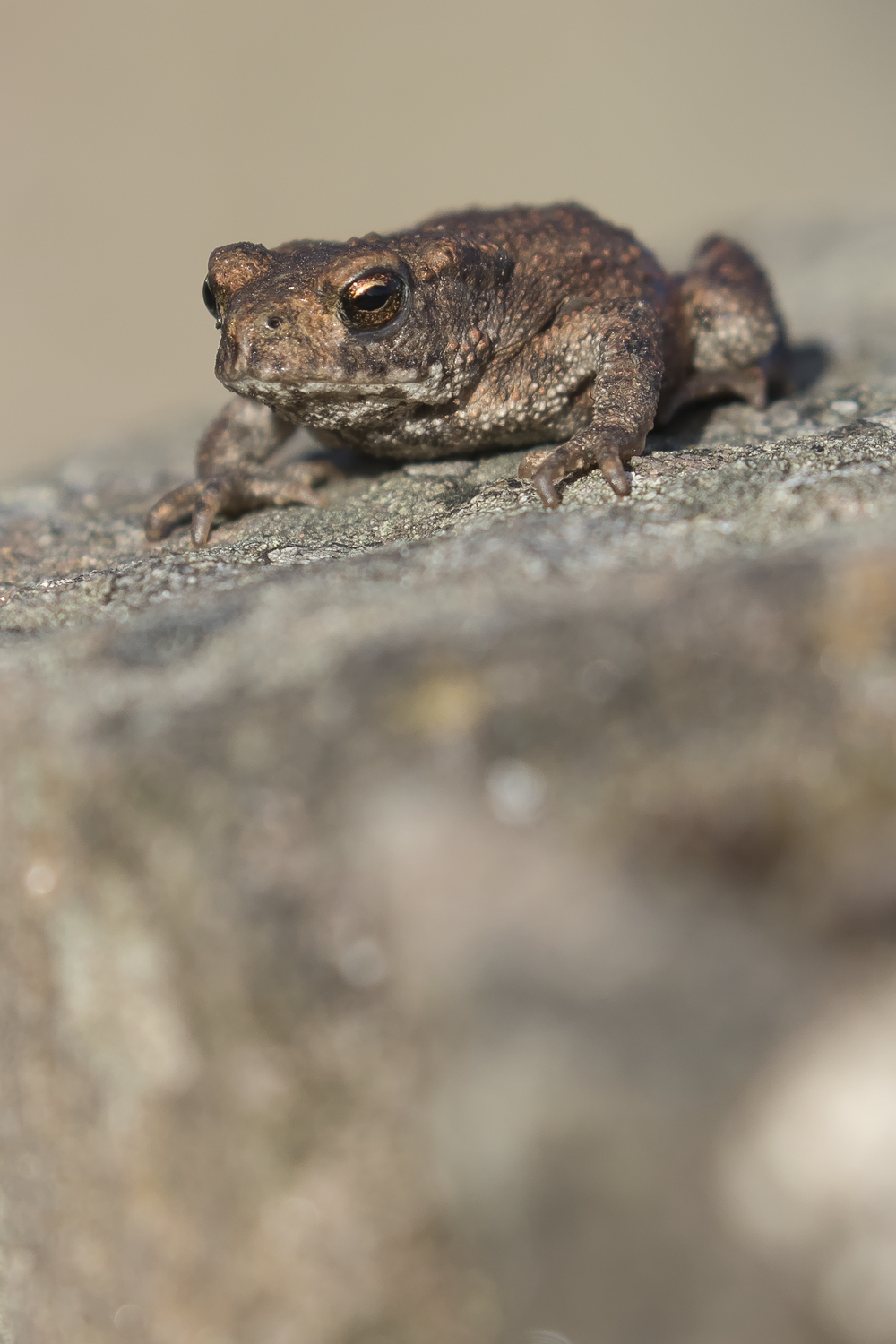Toadlet 9th October.png