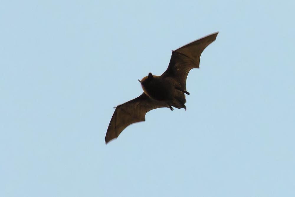 Bat 10th March.png