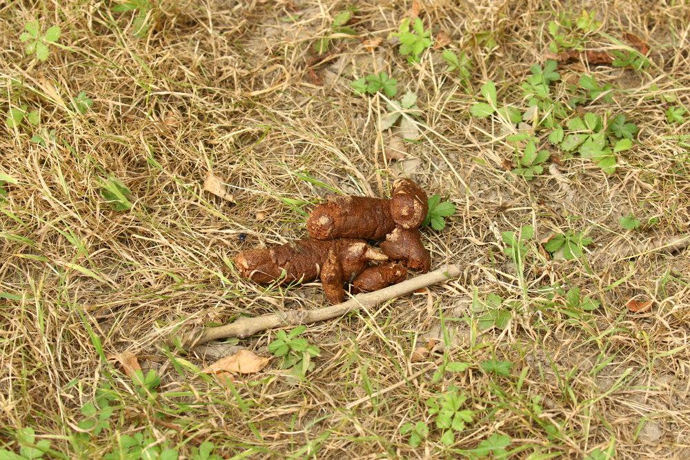 Dog Poo Llandegfedd