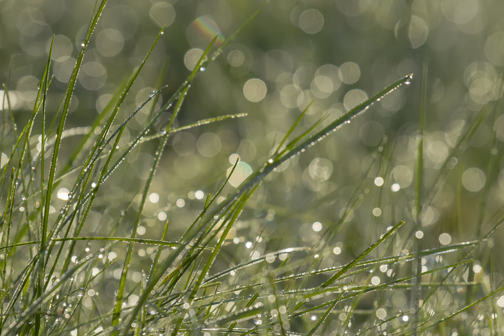 Morning Grass Dew 4th March.jpg