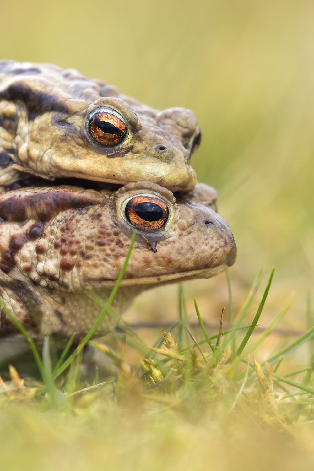 Toads Cropped 10th March.png