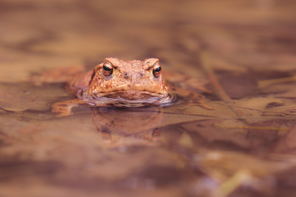 Male Toad 10th March.jpg