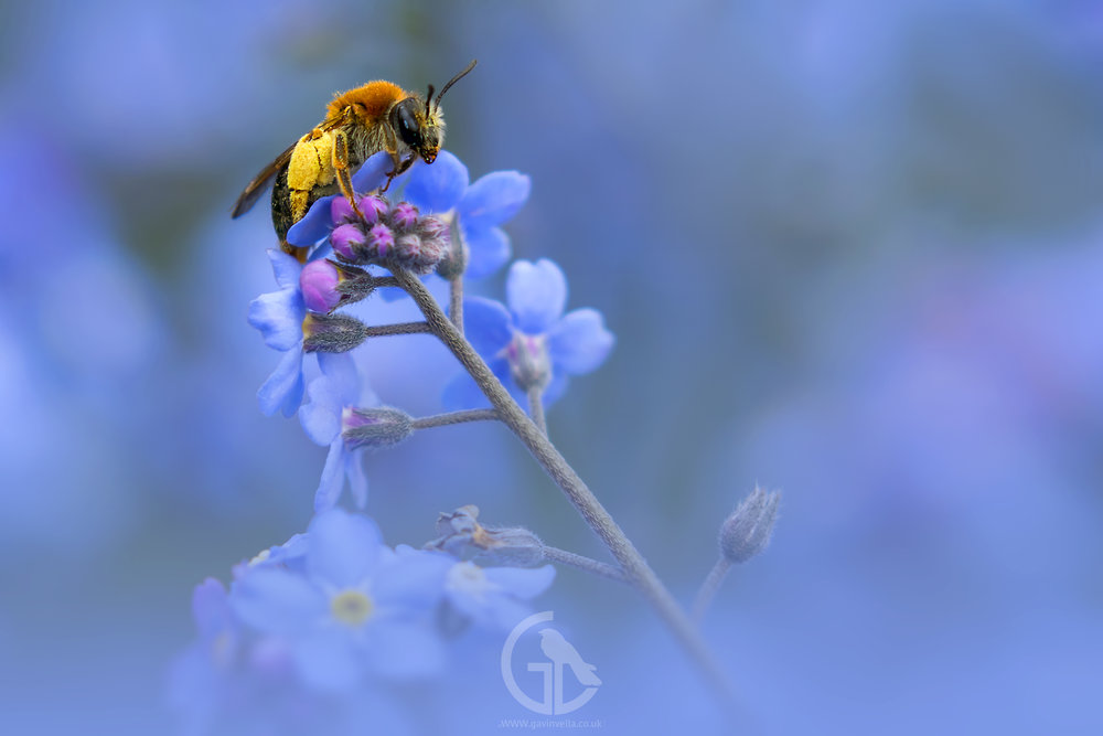 Early Mining Bee 21st April.jpg