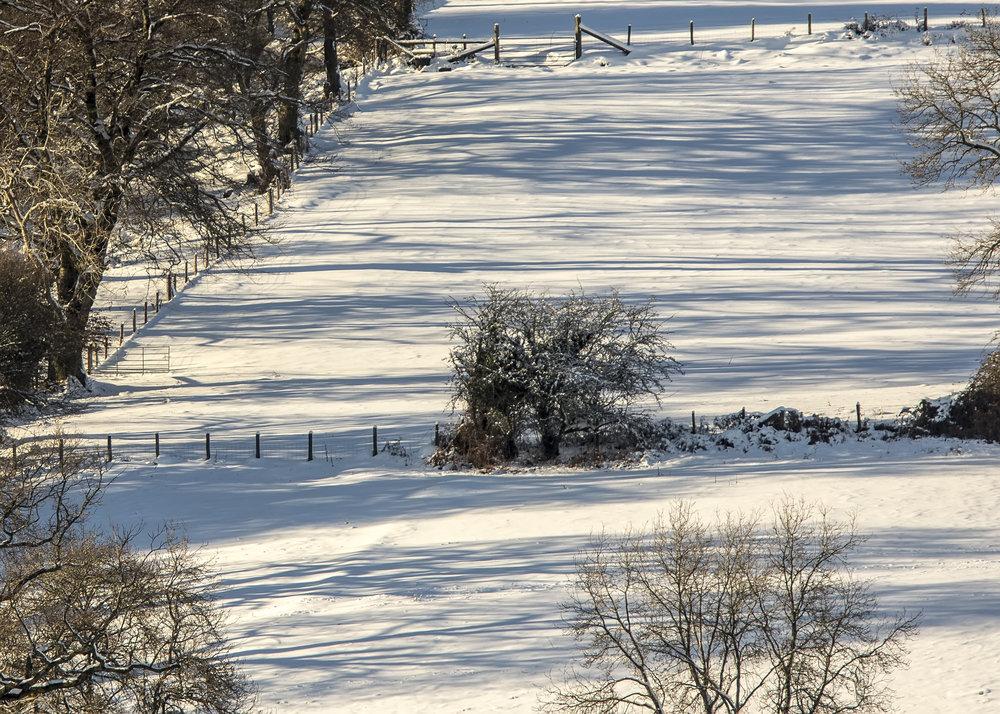 Tree Snow Shadows 11th December.jpg