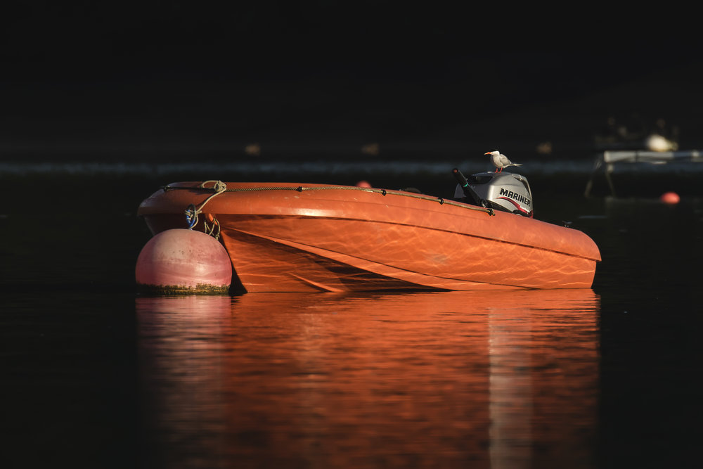 Tern Boat 30th July.jpg