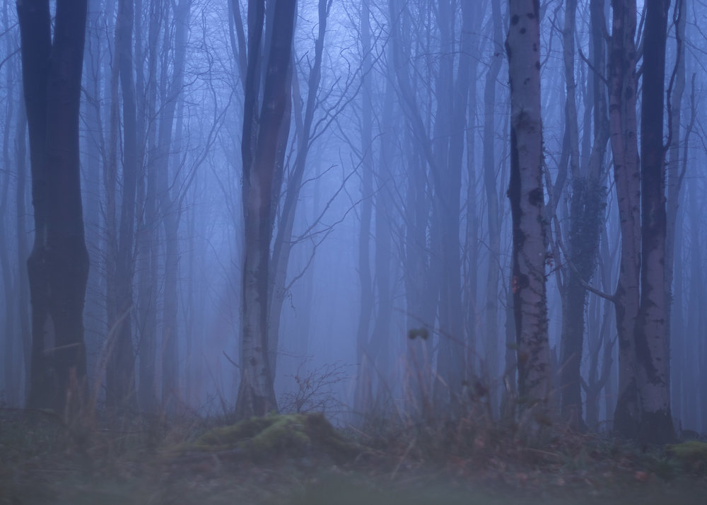 Misty Forest 20th July.jpg