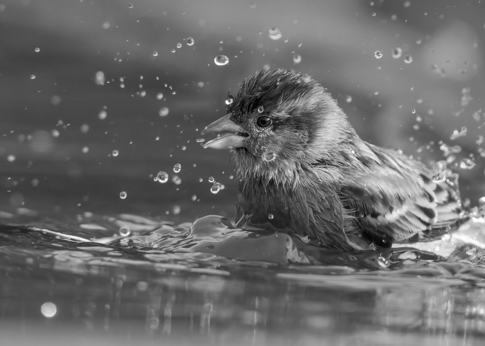 Sparrow Splash B&W 7th October.jpg