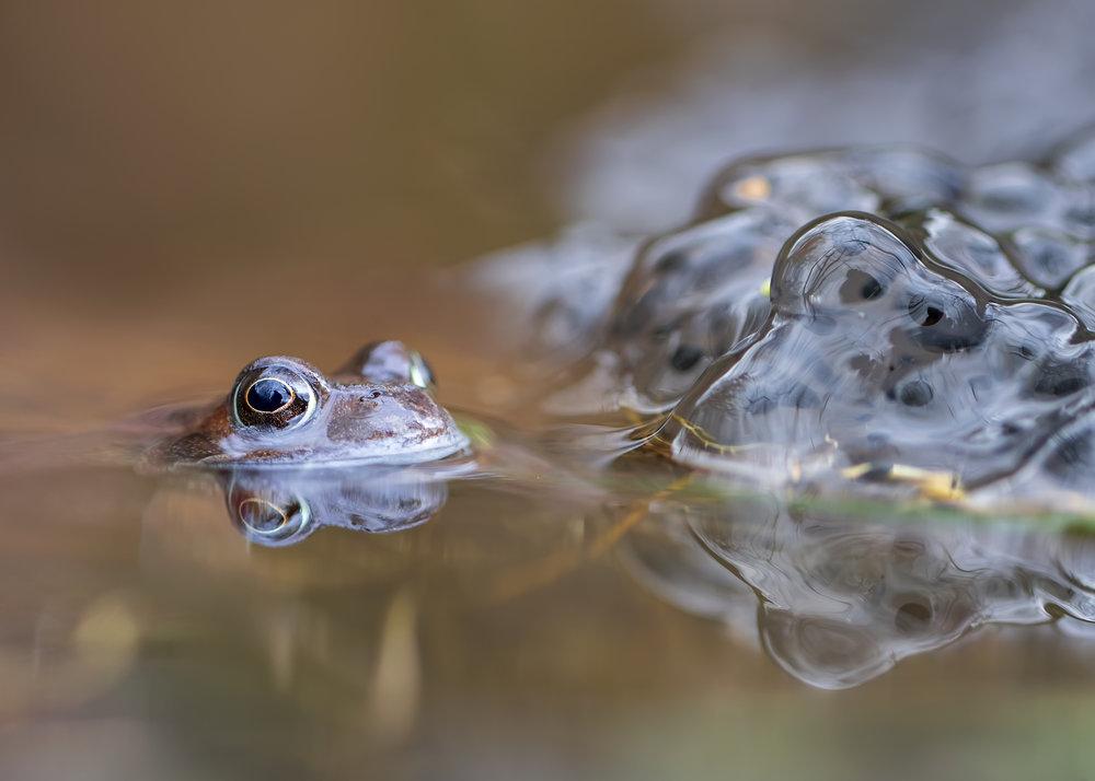Spring Frog 19th February.jpg