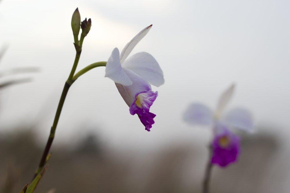 ventsflower1.jpg