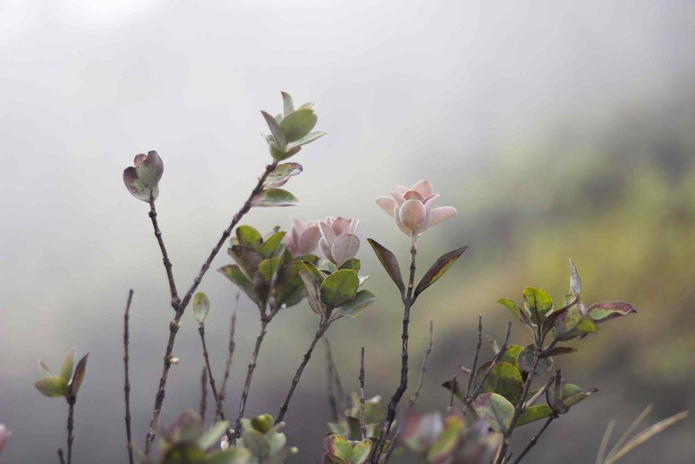 ventsflowers3.jpg