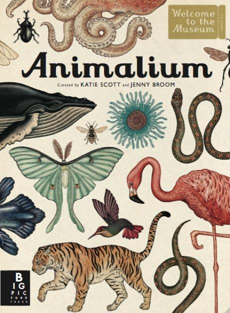 anorakmagazine-animaliumcover.jpg