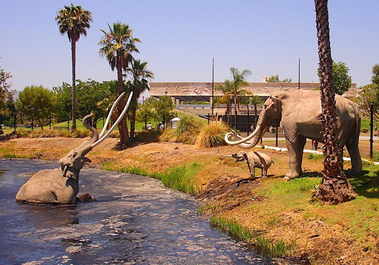 Mammoths once roamed Los Angeles! Many drowned in the natural tar pits – as depicted in this tragic scene by sculptor Howard Ball, installed at the La Brea tar pits fossil excavation site in LA in 1967.