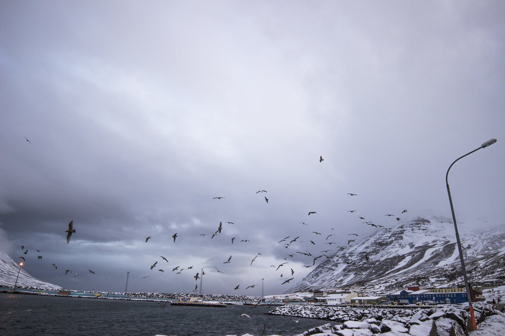 Iceland_11.jpg