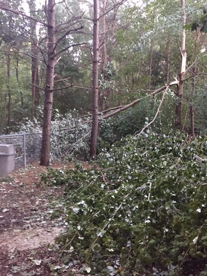 Millbrook Dog Park following Hurricane Matthew