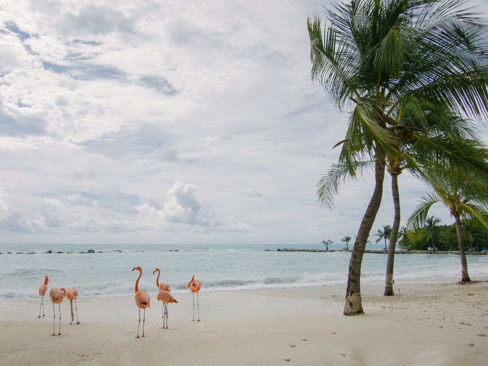 flamingos-2.jpg