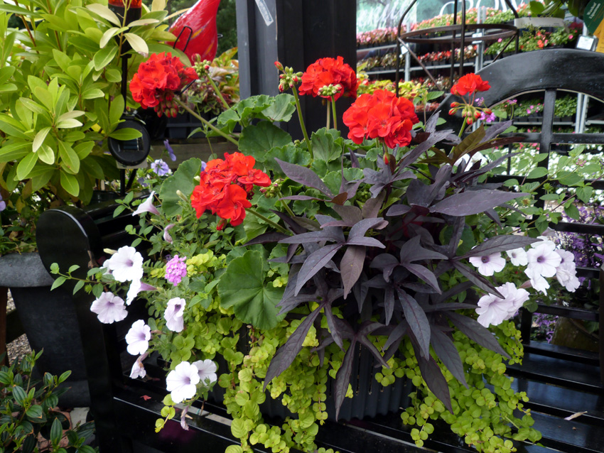 Take A Walk Any Day Around The Garden Center, And You Are Sure To Notice  The Gorgeous Potted Container Gardens Dressing Up The Benches And Entryways  And ...