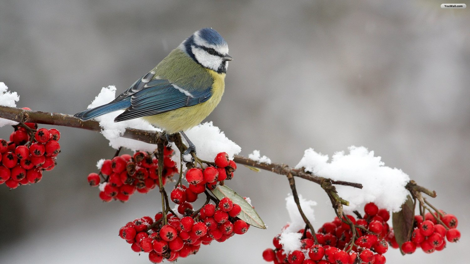 Image result for bird in winter