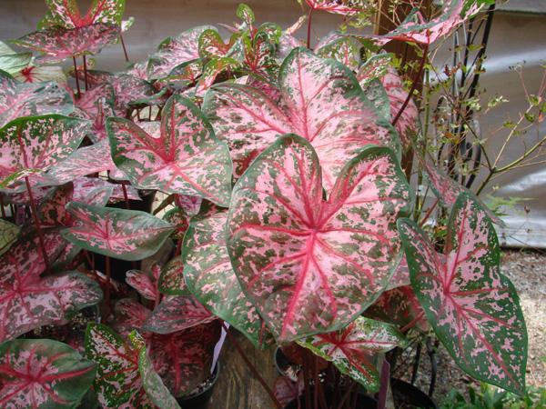 Summer Savings Spectacular Garden Supply Co