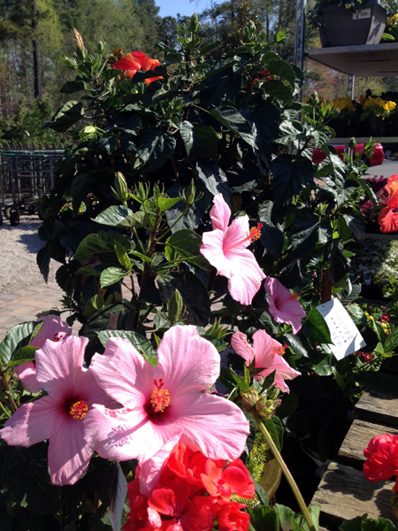 Going Tropical Garden Supply Co