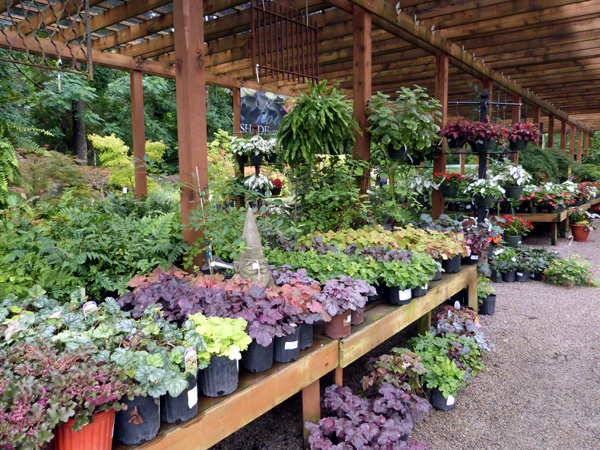 plants for shade gardening  garden supply co, Beautiful flower