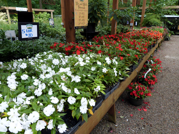 Impatiens  Garden Supply Co